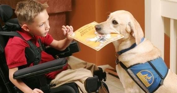 5111.12174.service-dog-with-boy.jpg