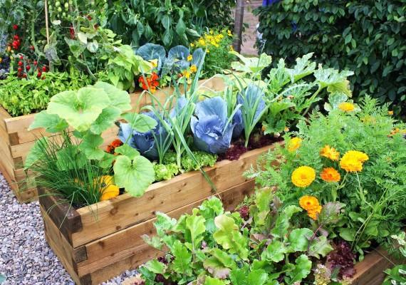fruit-veggie-month